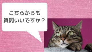 質問する猫
